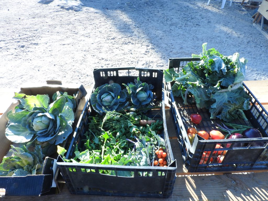 Our daily harvest suplimens our food in the kitchen, there is nothing better than picking your own food and then cooking it