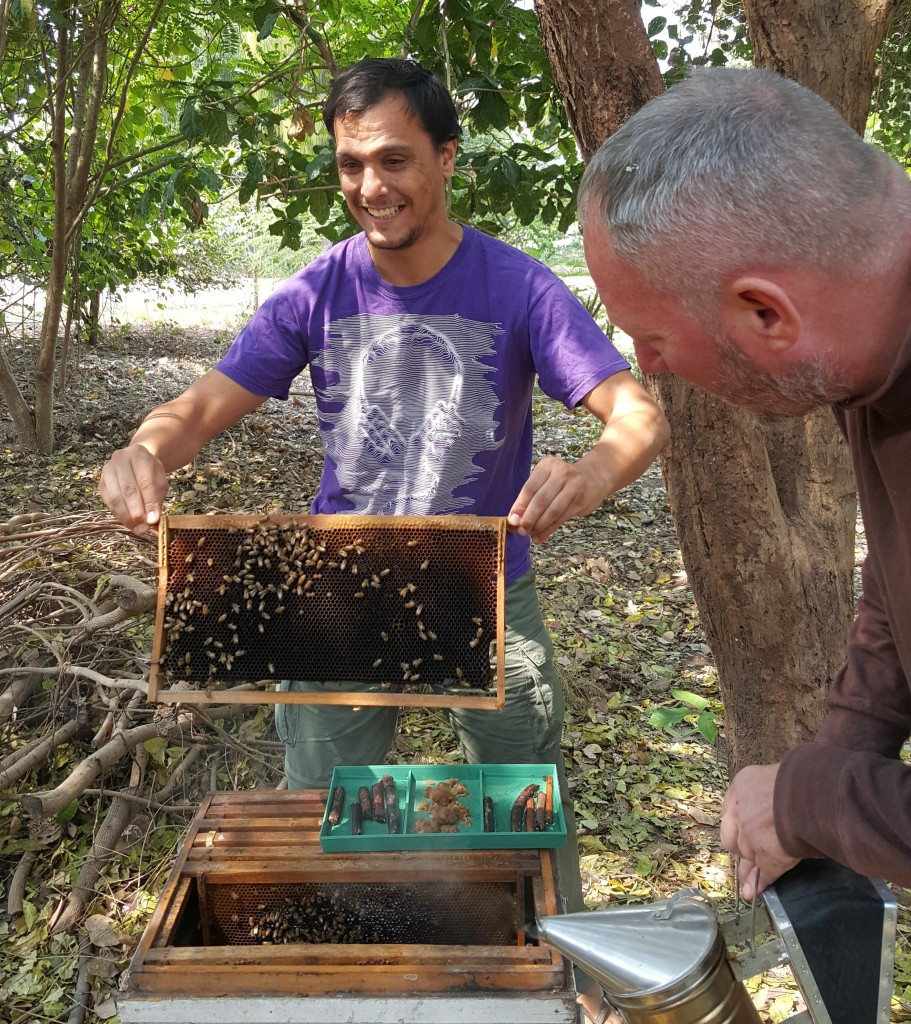 Bee Keeping for honey and pollination