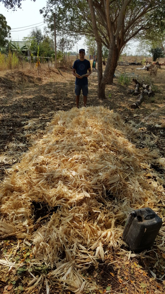 lasagne compost Bed