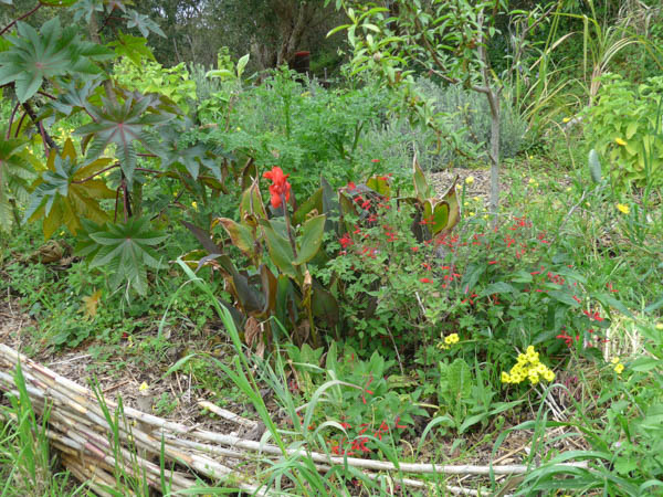 Food Forest Portugal