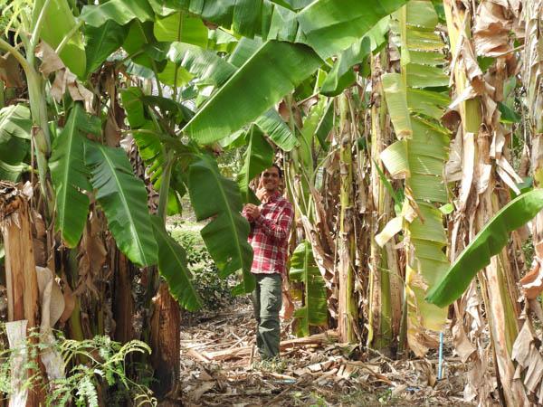 Food Forest Rak Tamachat