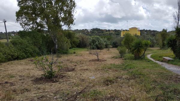 orchard osho gardens