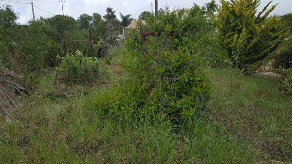overgrown food forest