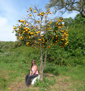 Volunteering at A Quinta in Alentejo