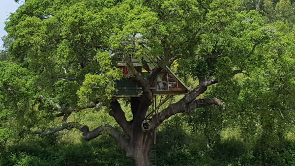 Tree House Portugal