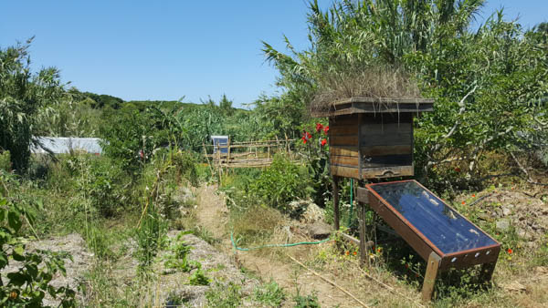 solar dehydrator terra alta portugal