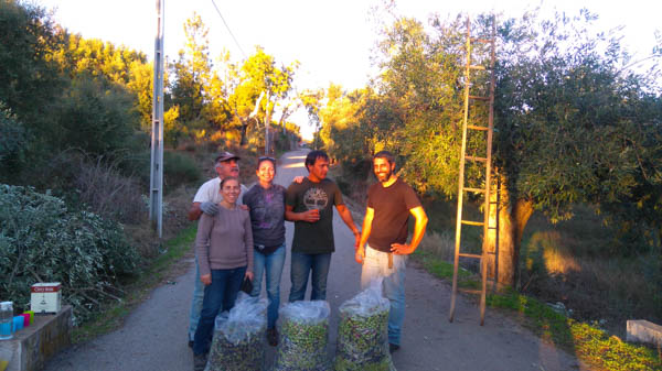 collecting-olives-permaculture