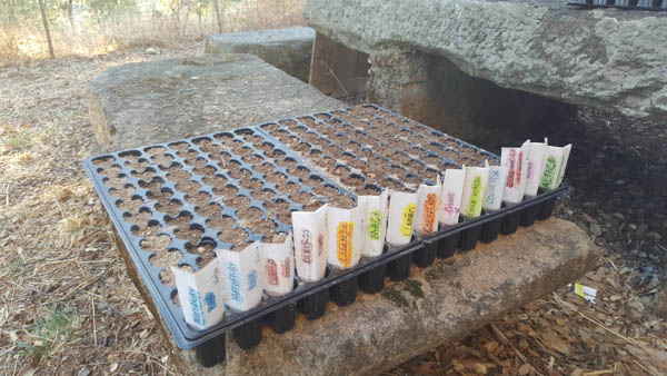 gardening-in-portugal