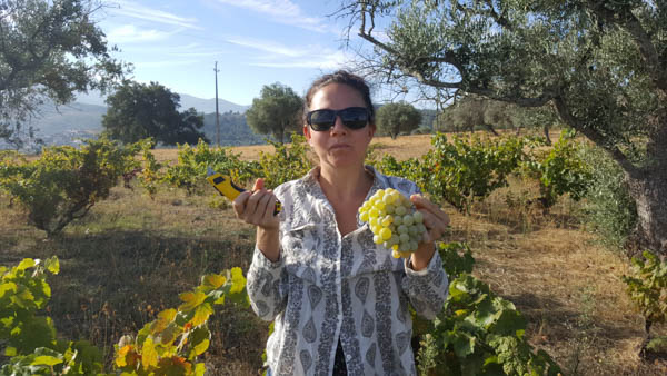 volunteering-harvesting-grapes