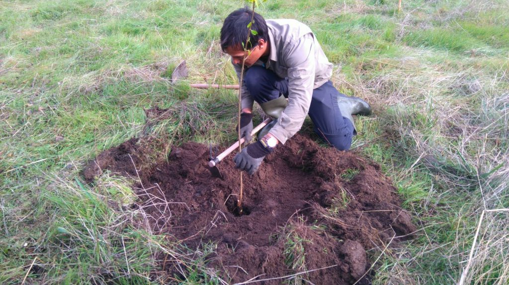 Everyone who has visited us has planted a tree to help with building our food forest or reforestation