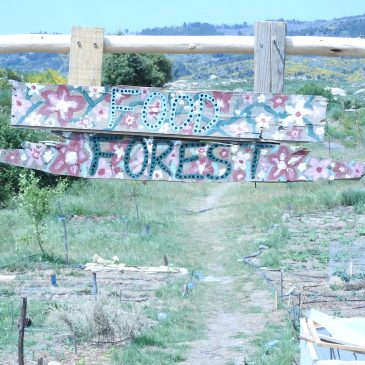 Food Forest Course Portugal