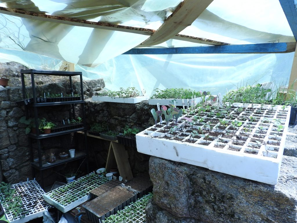 Permaculture Greenhouse