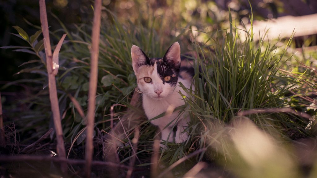 Our cat sits by the small pond next to one of our grey water systems, we plan to transofrm this into a flood based terraced system that waters itself every time we shower