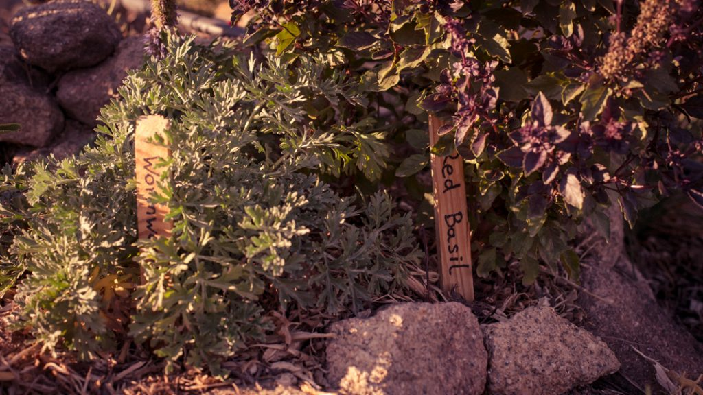 We grow all types of herbs in various herb gardens we have around the land as well as mixing into the food forest