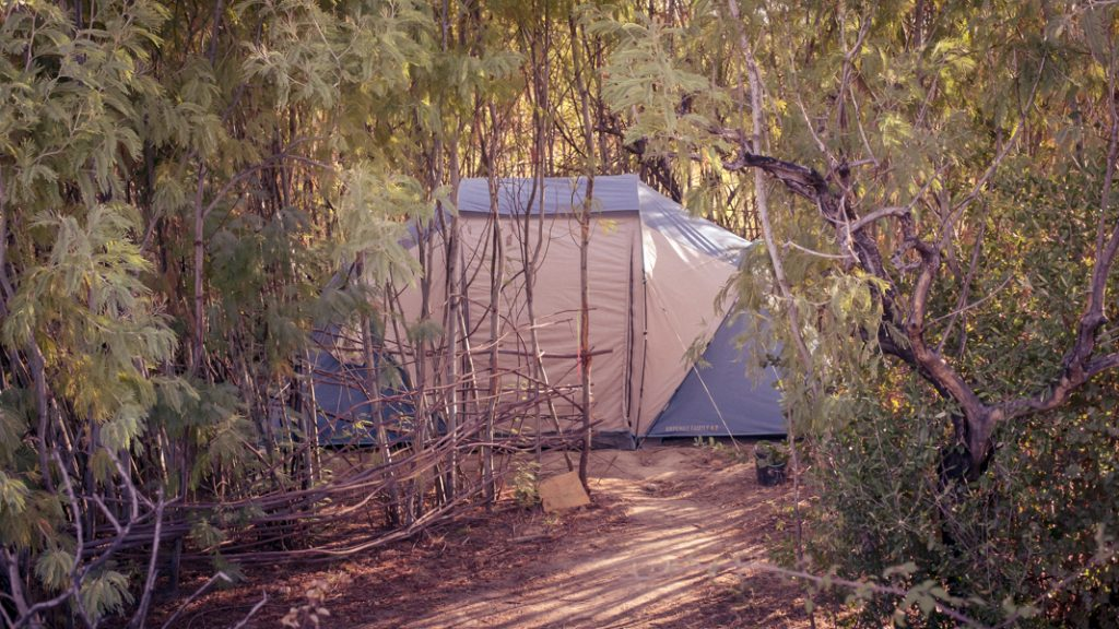 One of the tents in the mimosa forest