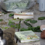 Wild Greens, foraging workshop portugal