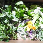 Wild Greens, foraging and medicinal plants workshop