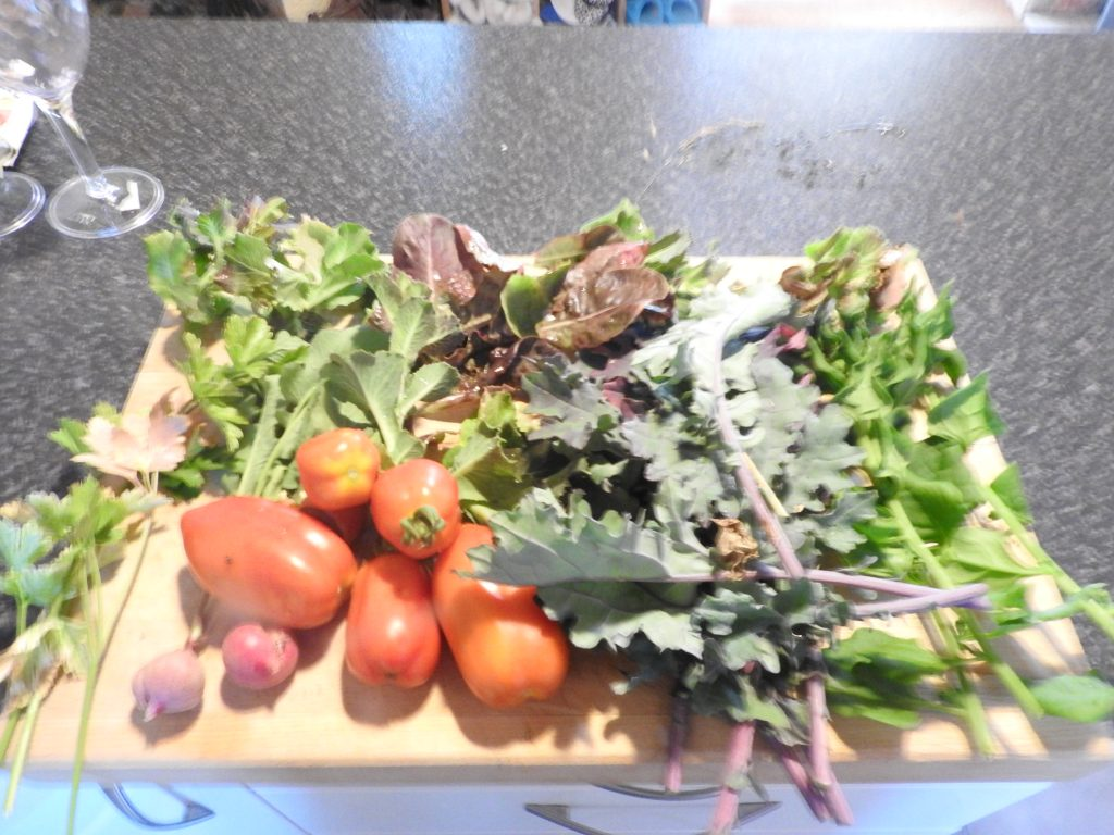 Daily fresh harvest, we have to collect our food every day from the garden