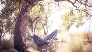 One of the hammocks in shade