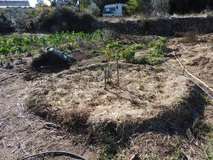 Planting the orange tree into a guild
