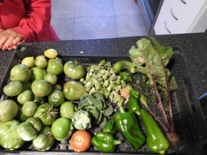 More fresh vegetables from the garden