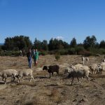 Integrating Animals – Permaculture