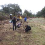 Planting propagation