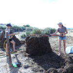 Compost for food forest