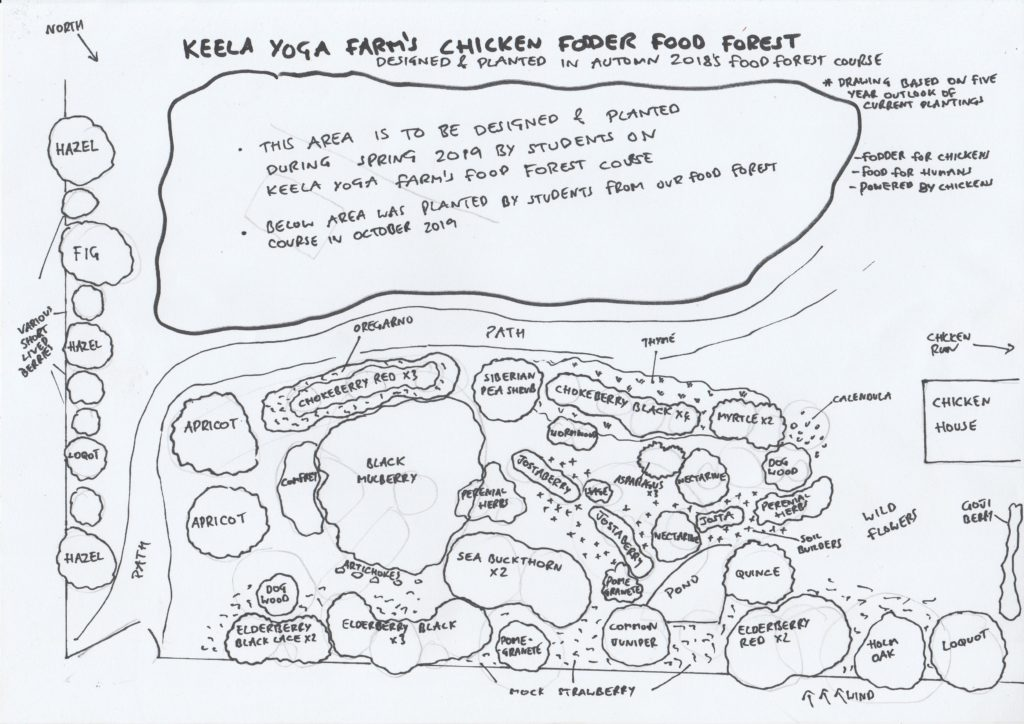 Chicken food forest design