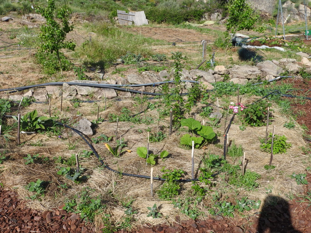 Terra 1 food forest
