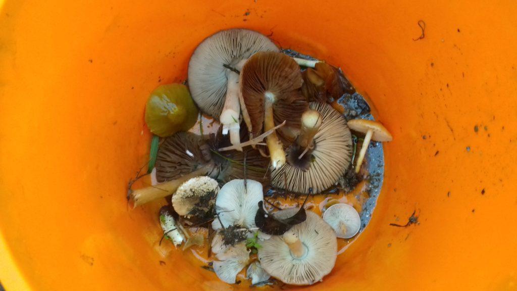 Spreading mushroom Spores
