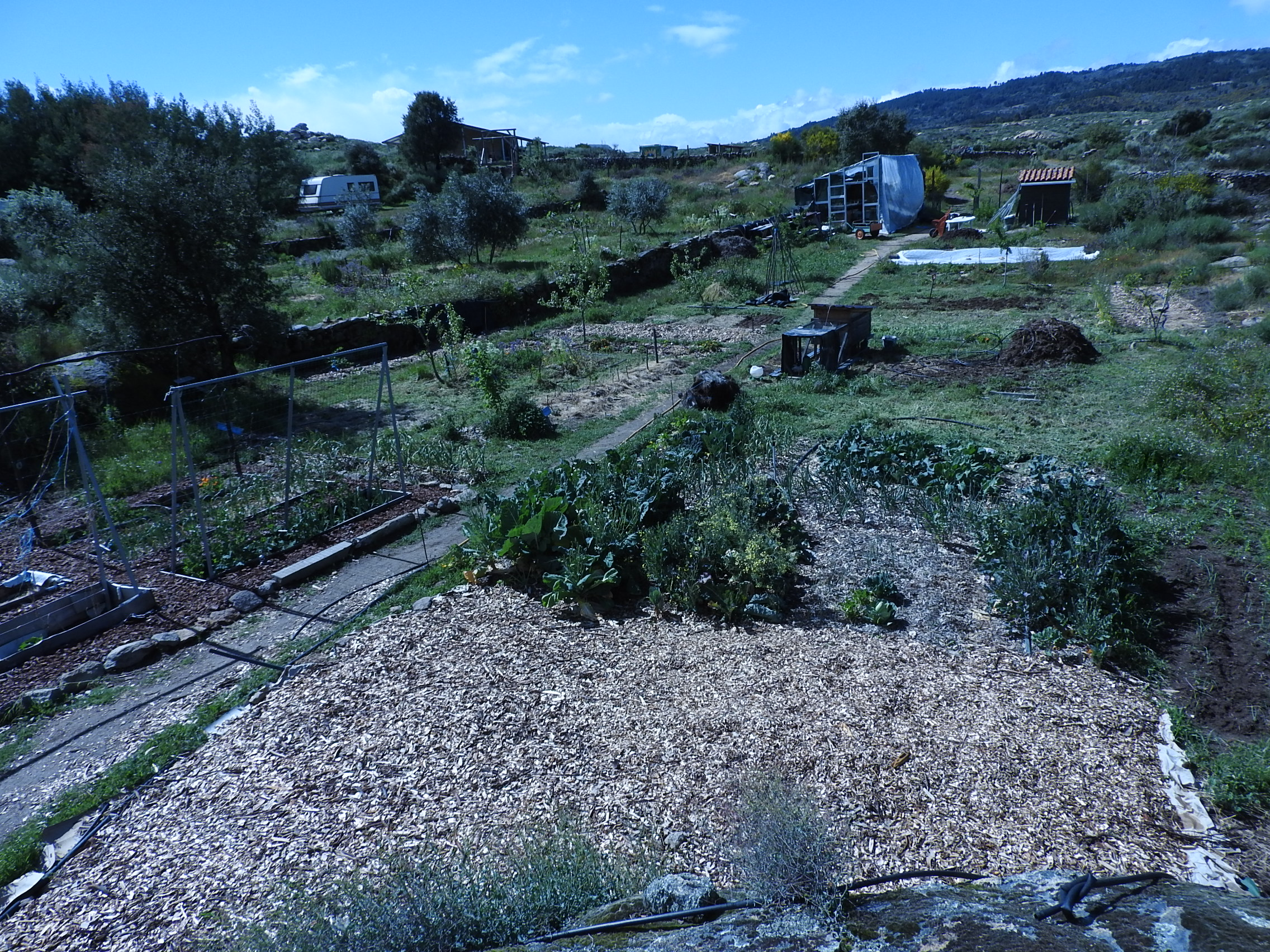 Permaculture Beds In Portugal