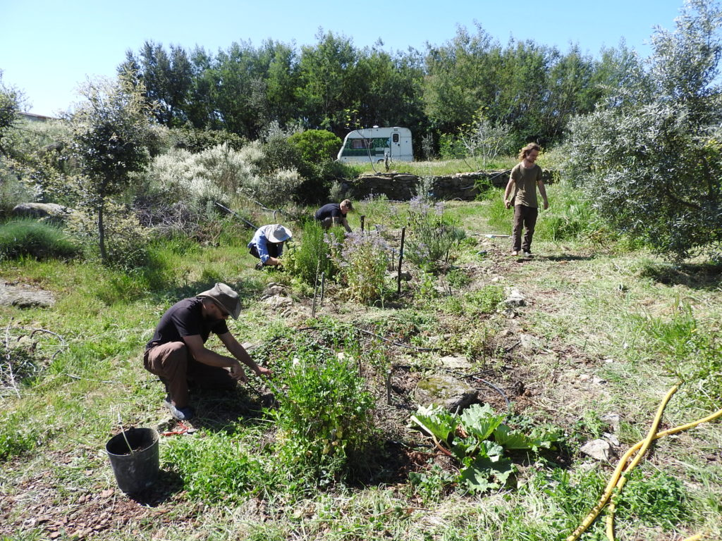 Click for our food forest updates