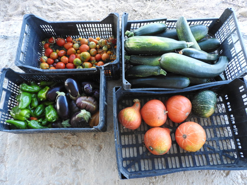 Daily Harvest of Food