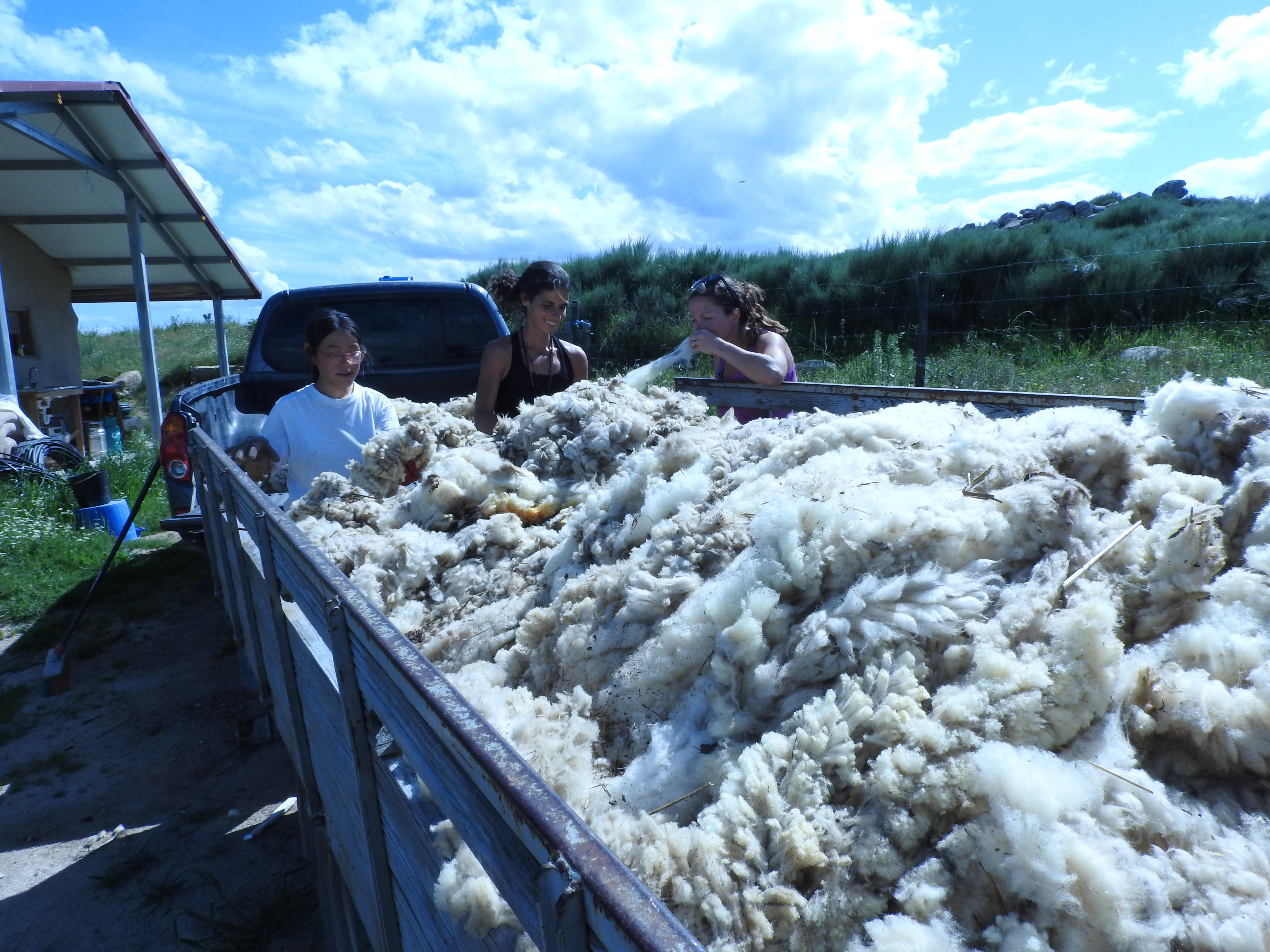 home made Sheep wool for insulation