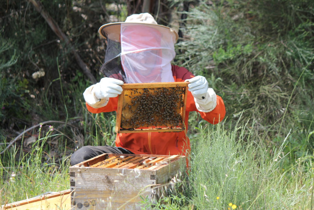 permaculture internship - bee keeping