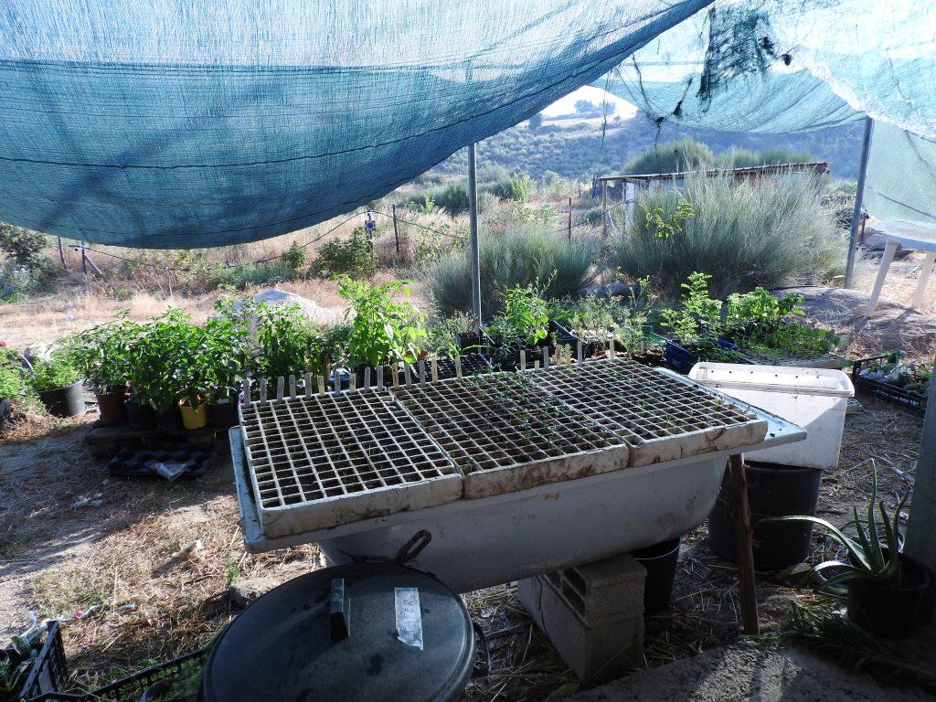 Plantin winter vegtables